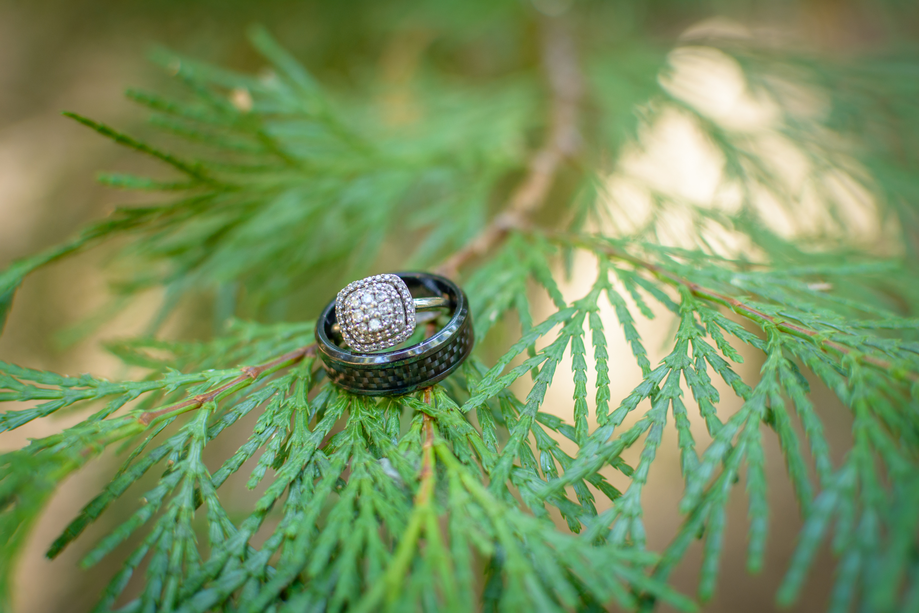 The elegant wedding rings sit atop the branch of a tree.