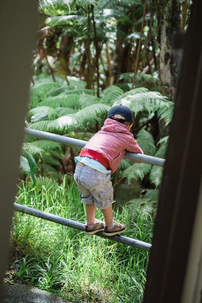 A little boy perches on the metal poles of a fence looking into the rainforest.