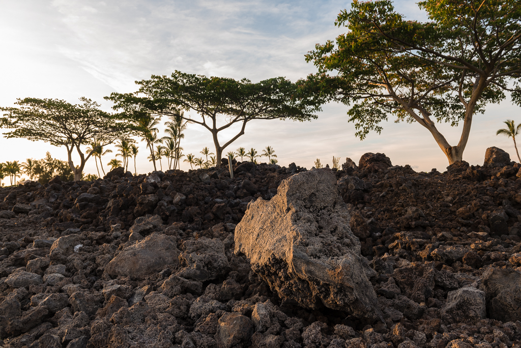 A volcanic rock sits in focus amondst a grove of tropical trees in Hawaii.