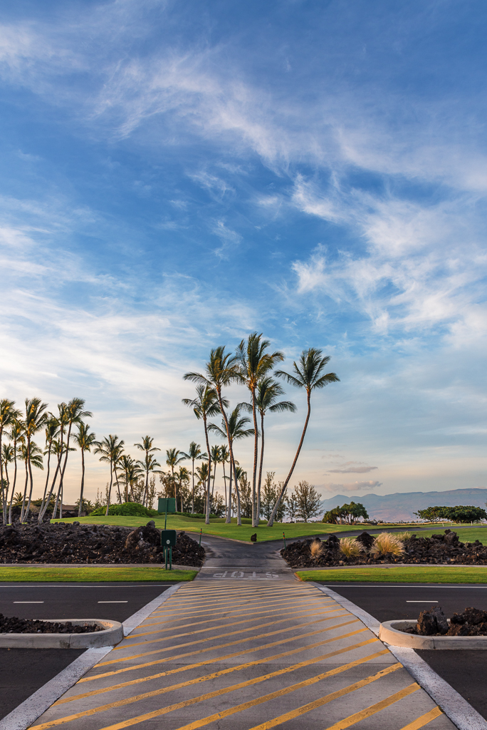A crosswalk at a Hawaiian resort in Waikoloa terminates into a grove of palm trees.