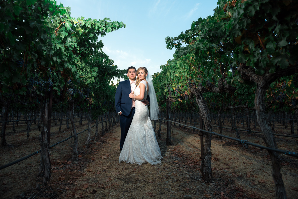 A bride and groom stand among the grapevines in a vineyard in Livermore, CA.