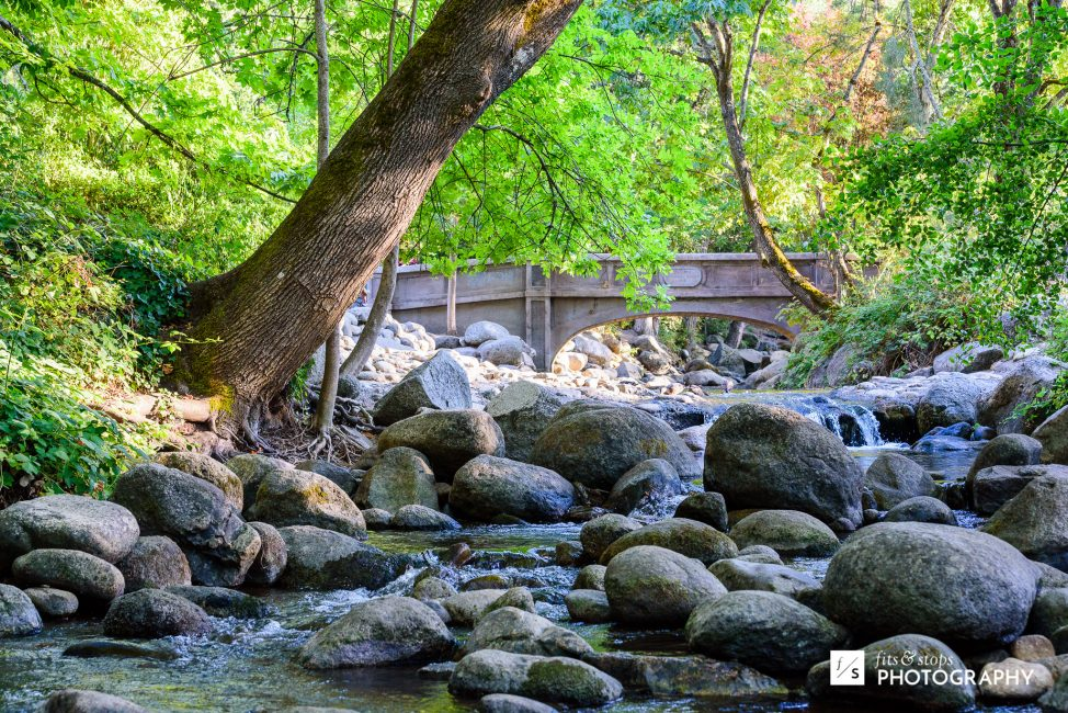 The crown jewel of Lithia Park is the creek of the same name that runs through it.