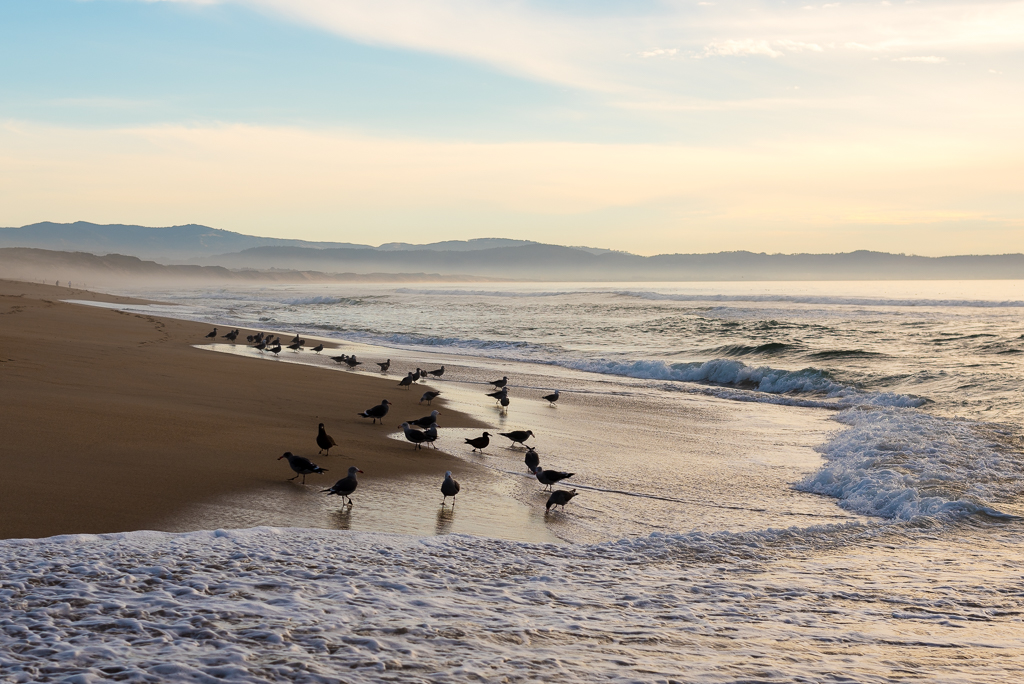Seagulls gather at the shoreline of Marina State Beach with Monterey, California in the background.