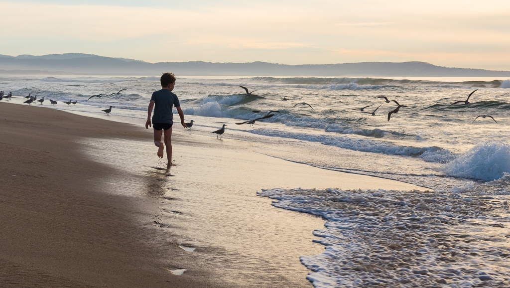 A young boy leaves watery footprints along the beach as he runs toward a group of seasgulls.
