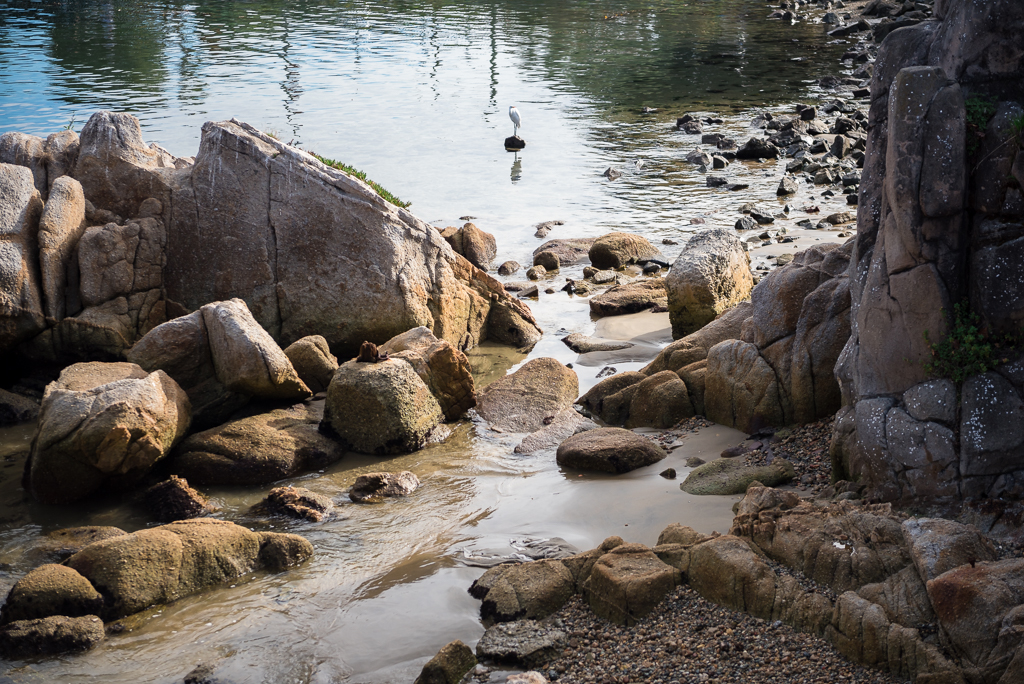 A single bird sits upon a rock just offshore from Fisherman's Wharf in Monterey, CA.