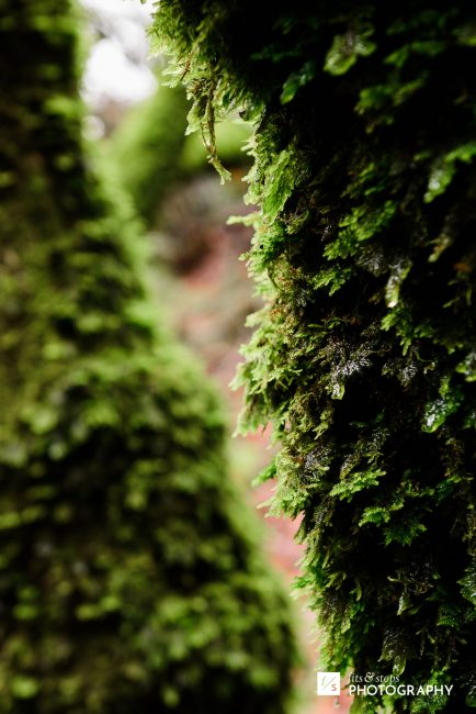 Tree trunks covered with moss and foliage after a winter rain.
