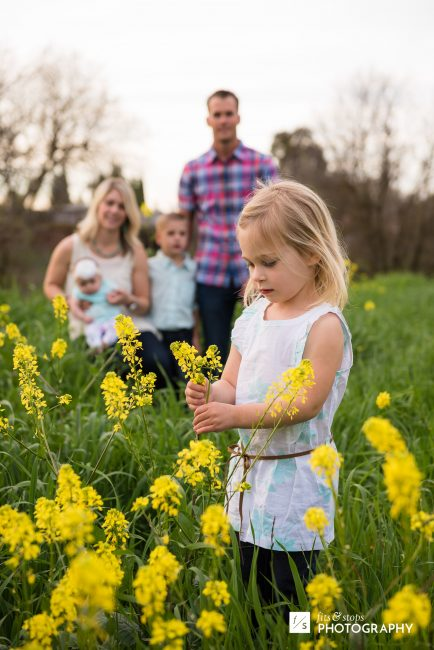 A little blond girl picks yellow wildflowers while the rest of her family poses for a portrait.